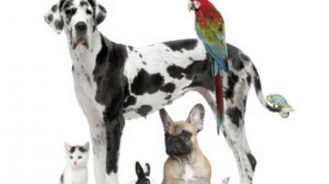 unapace-animali-domestici_692x600